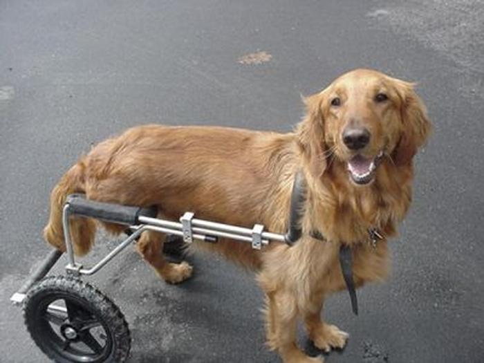 Dog With  Legs And Wheels