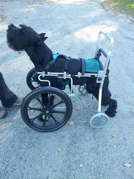 Front Wheel Carts Eddie S Wheels For Pets The Pet