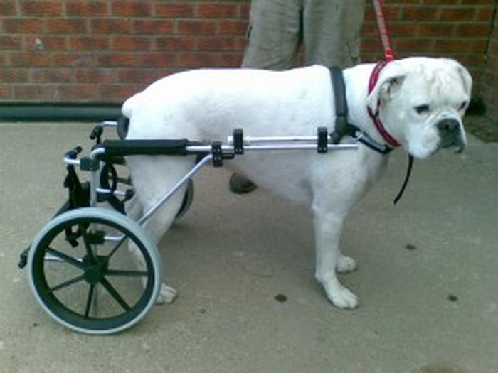 Dog Wheel Carts Uk