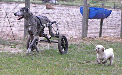 Eddie S Wheels For Pets The Pet Mobility Experts