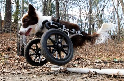 Front Wheel Carts Eddie S Wheels For Pets The Pet Mobility Experts