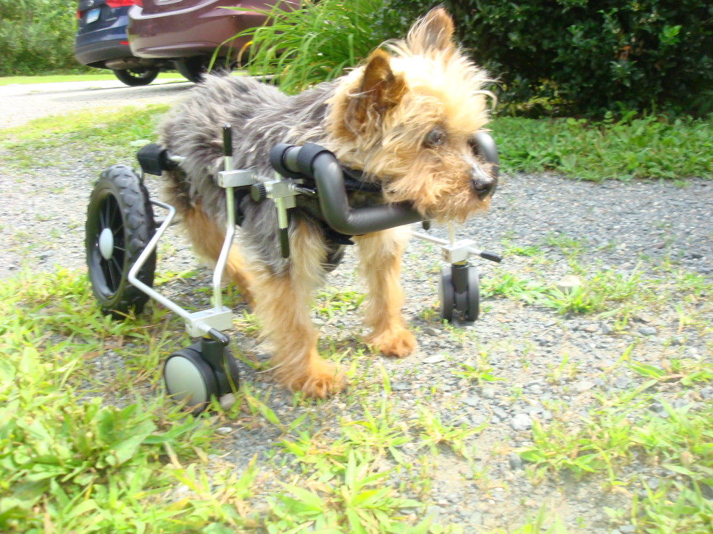 Quads & Walkers - Eddie's Wheels for Pets - The Pet Mobility