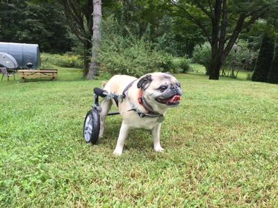 Used Carts - Eddie's Wheels for Pets - The Pet Mobility Experts