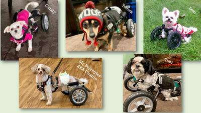 Eddie's Wheels for Pets - The Pet Mobility Experts