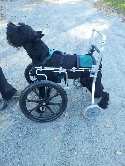 What We Mean by CUSTOM Dog Wheelchair