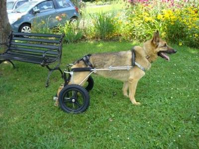News - Eddie's Wheels for Pets - The Pet Mobility Experts