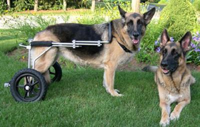 Rear-Wheel Carts - Eddie's Wheels for Pets - The Pet